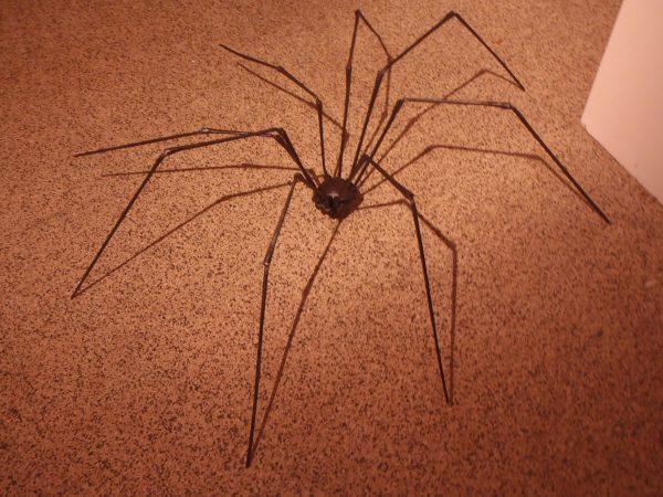 Creepy Crawlies - Metal Mantis - Colby Brinkman